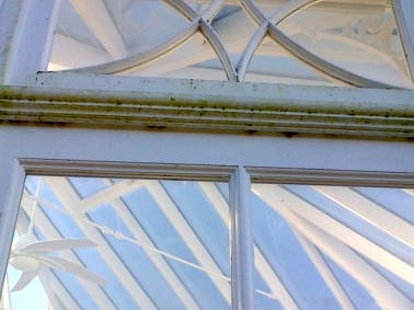 Algae covered detail